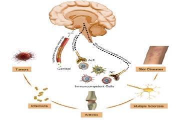 Vir: http://complementaryoncology.com/wp-content/uploads/2012/06/psychoneuroimmu.jpg