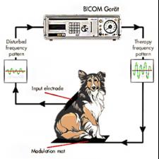 Bioresonančna terapija pri živalih. Vir: http://animalhealthoasis.com/holistic-veterinary-services/bioresonance-therapy/bicom-bioresonance-therapy--diagnosis-and-treatment.html